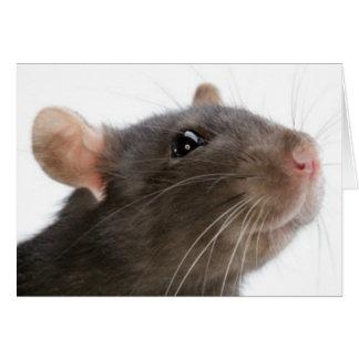Rats!!! Greeting Card