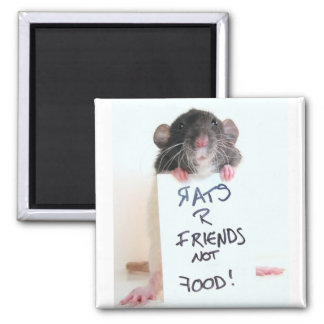 Rats R Friends Not Food 2 Magnet