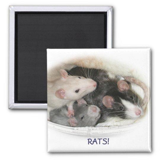 RATS! SQUARE MAGNET