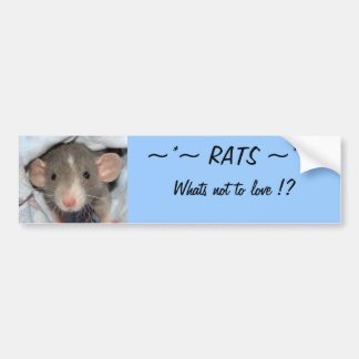 RATS...whats not to love ? Bumper Sticker