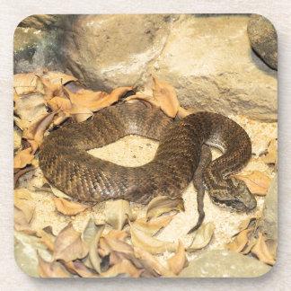 Rattlesnake Beverage Coasters