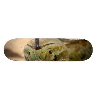 Rattlesnake Closeup Photo Skate Boards