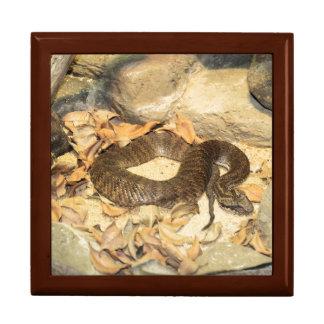 Rattlesnake Gift Box