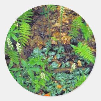 Rattlesnake orchid round sticker