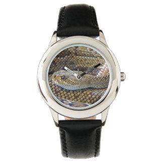 Rattlesnake photo watch