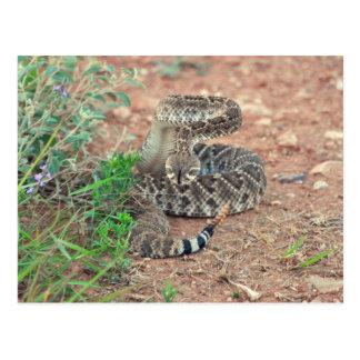 Rattlesnake Post Cards