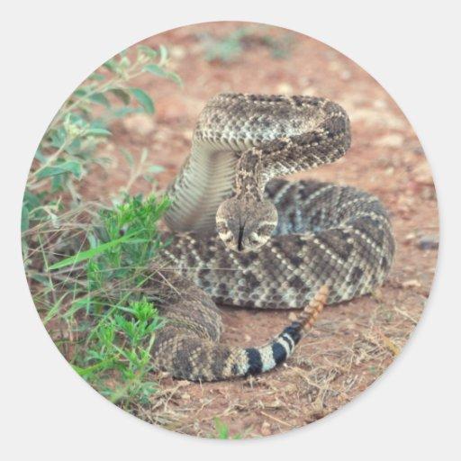 Rattlesnake Round Stickers