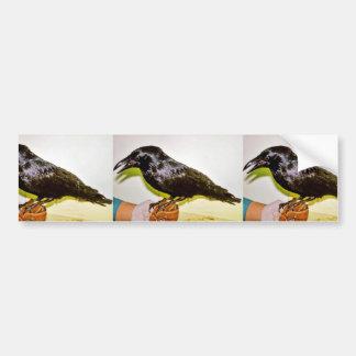 Raven in Hand Bumper Sticker
