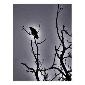 Raven On a Moonlit Night Postcard