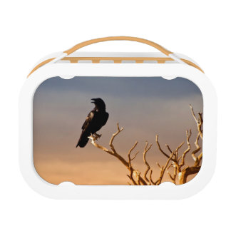 Raven on Sunlit Tree Branches, Grand Canyon Lunchboxes