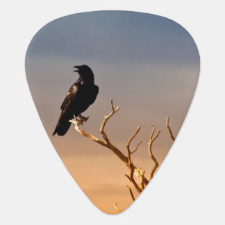Raven on Sunlit Tree Branches, Grand Canyon Plectrum