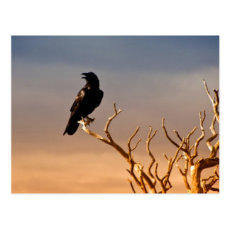 Raven on Sunlit Tree Branches, Grand Canyon Postcard