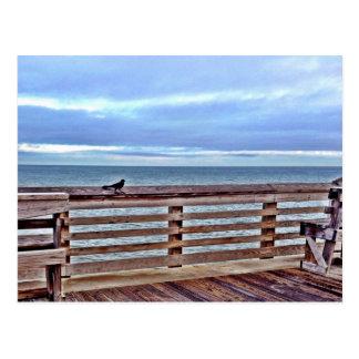 Raven on the Jennette s pier obx North Carolina Postcard