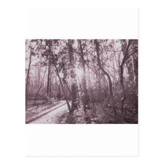 Raven Rock Sunshower Postcard