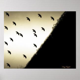 Ravens in Flight Poster