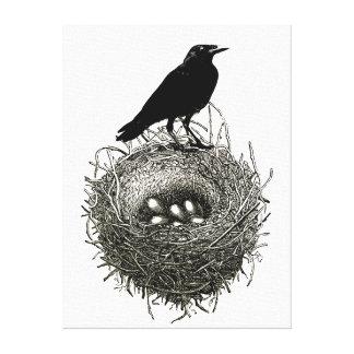 Raven's Nest with Eggs Canvas Prints