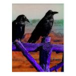 Ravens Postcard