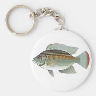 Raw Seafood Tilapia Fish Vector Basic Round Button Key Ring