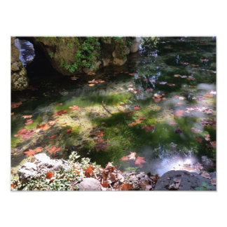 rays and leaves on water photo