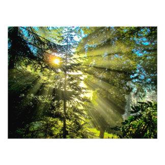 Rays Of Light Through The Trees Art Photo