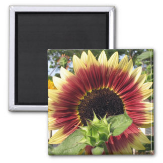 Razzmatazz Sunflower Magnet