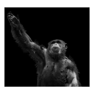 Reaching Wildlife Conservation Chimp Art Canvas Poster