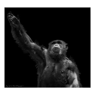 Reaching Wildlife Conservation Chimp Art Print