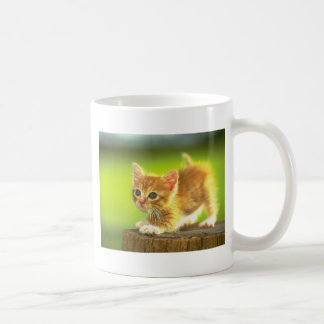 Ready To Pounce Kitten Basic White Mug