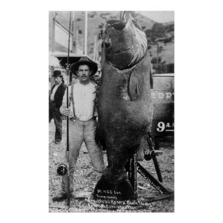 Real Big Fish, early 1900s Posters