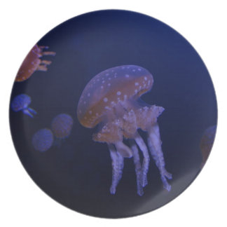 Real photo taken of jelly fish plate