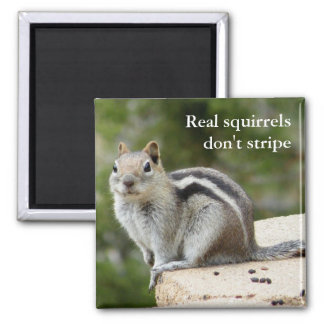 Real squirrels don't stripe square magnet