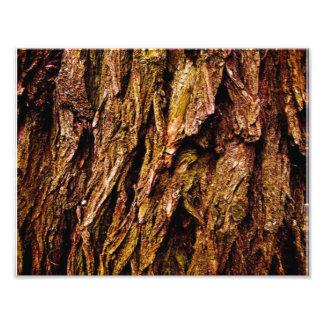 Real Tree Bark Photograph