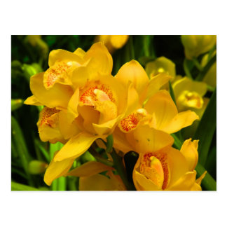 Real Yellow Flower Postcard