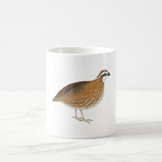 Realistic Quail Bird Coffee Mugs