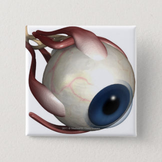 Realistic rendering of the muscles of the eye 15 cm square badge