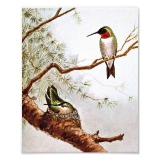 Realistic Ruby-Throated Hummingbird Art Photo