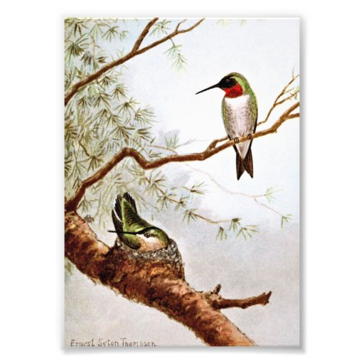 Realistic Ruby-Throated Hummingbird Art Photographic Print