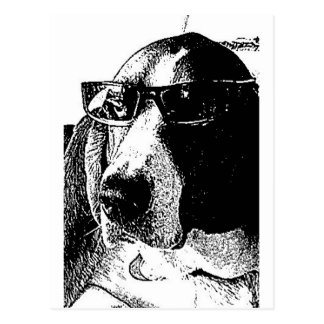 REally cool basset hound Postcard