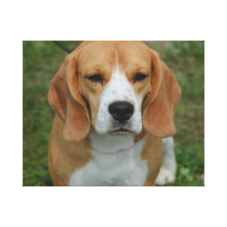 Really Cute Beagle Pup Stretched Canvas Print