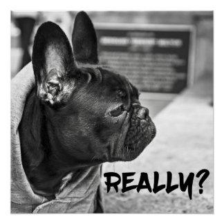 """Really"" Dog"
