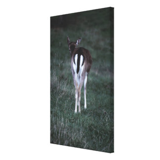 Rear view of a deer , New Zealand Canvas Print