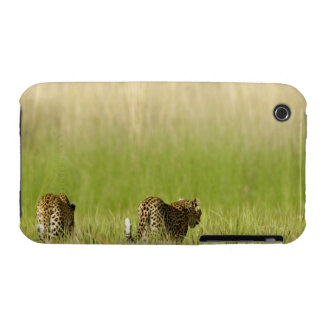 Rear view of Leopard (Panthera pardus) and cub iPhone 3 Covers
