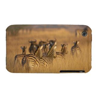Rear view of Plains Zebra (Equus quagga), Tala iPhone 3 Case-Mate Cases