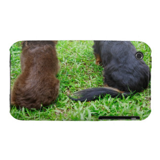 Rear view of two Dachshund dogs iPhone 3 Cover
