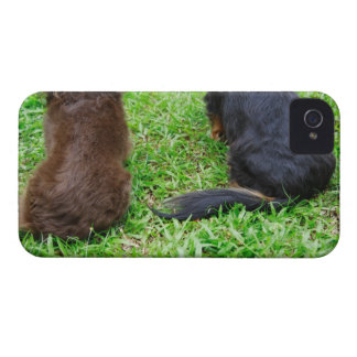 Rear view of two Dachshund dogs iPhone 4 Cover
