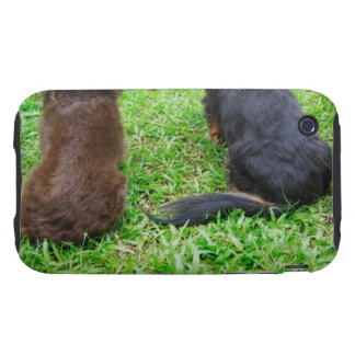 Rear view of two Dachshund dogs Tough iPhone 3 Case