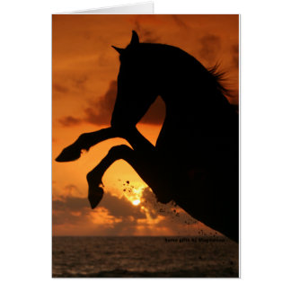 Rearing in the Sunset Greeting Card