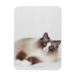 Reclining Cat Rectangular Photo Magnet
