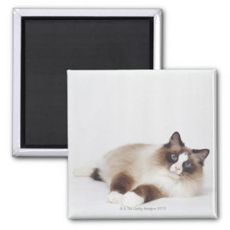 Reclining Cat Square Magnet