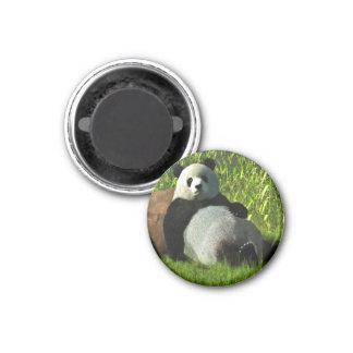 Reclining Panda Refrigerator Magnet